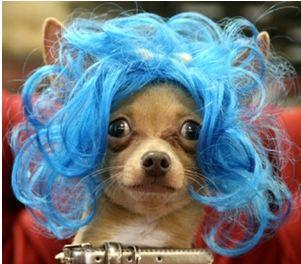 parrucca blu per cani
