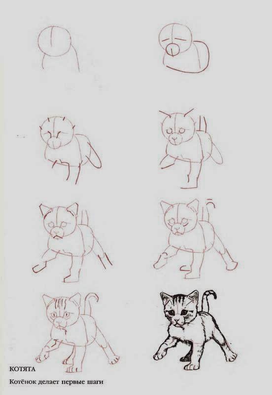 Учимся рисовать карандашом поэтапно для начинающих по схеме