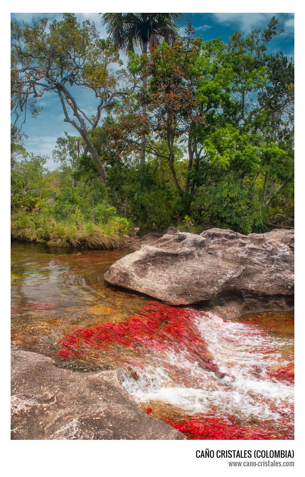 Caño Cristales, río de los 5 colores