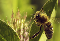 """""""Mais que Mel"""" - Novo documentário fala dos riscos de um mundo sem abelhas"""