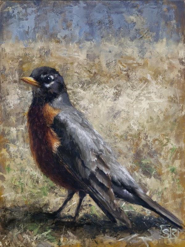 American robin painting, oil on canvas, avian art, Shannon Reynolds