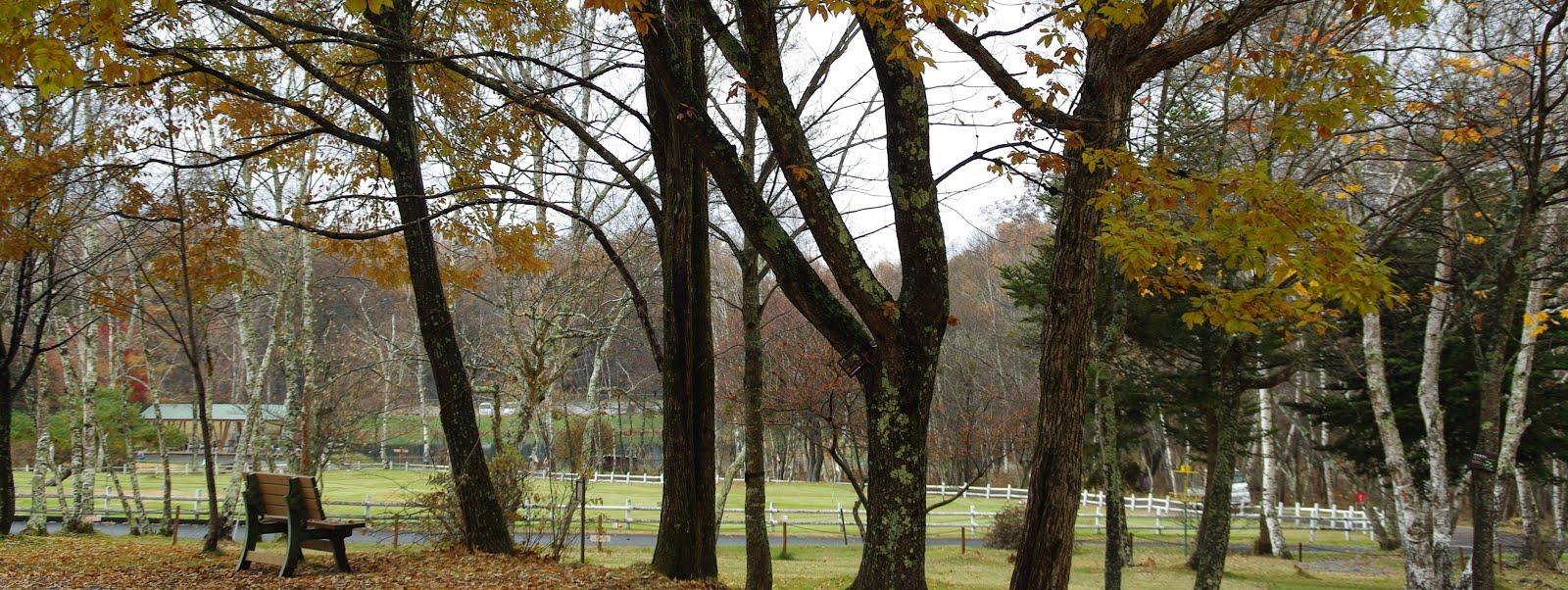 美しい秋の公園