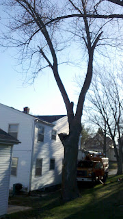 Leaning silver maple in Dundee, Omaha prior to removal by American Arborist tree care provider
