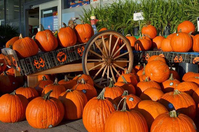 Pumpkins to use in gala pumpkin fest