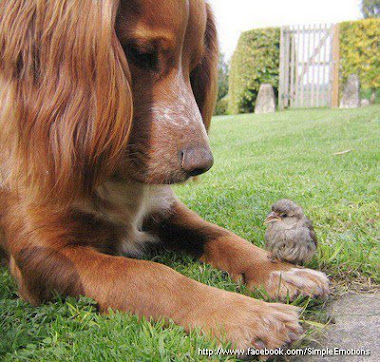 Köpek ve Kuş