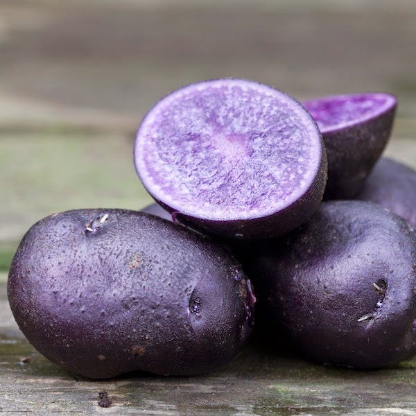 potatis, sättpotatis, självhushåll, odla egen potatis, blå potatis, potatisodling