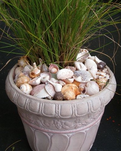 seashell pot