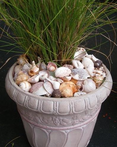 seashell pot