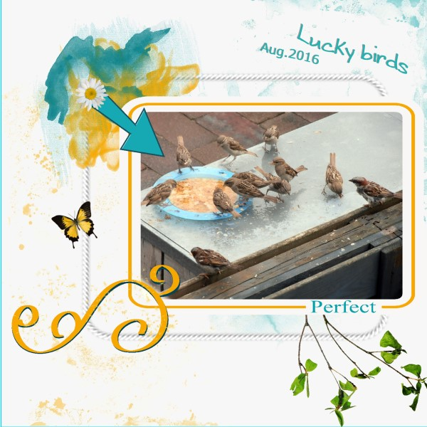 Aug. 2016 Lucky birds