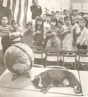 Room 8 (1947–1968) was a neighborhood cat