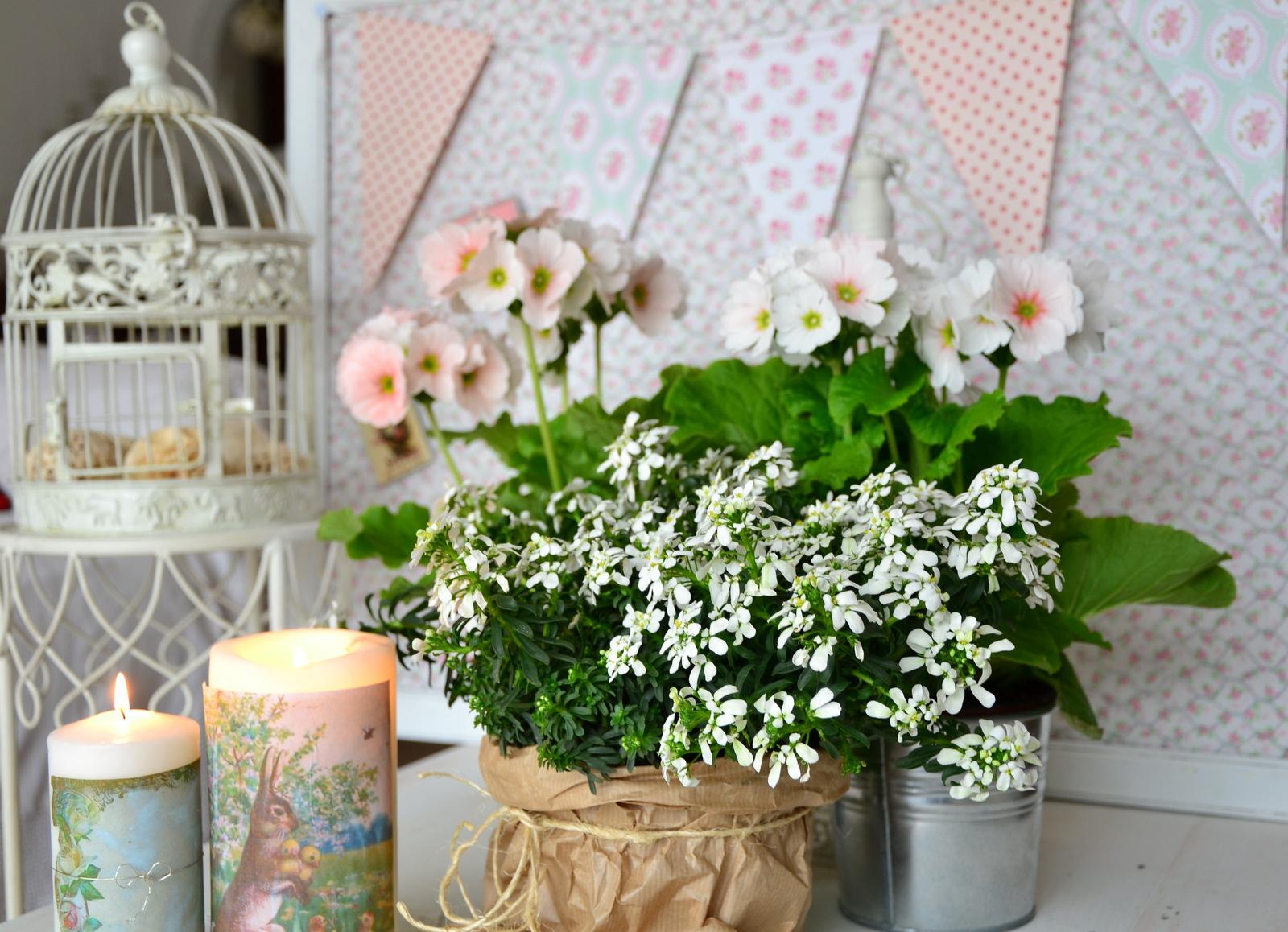 Immagini fiori primaverili for Immagini per desktop primavera