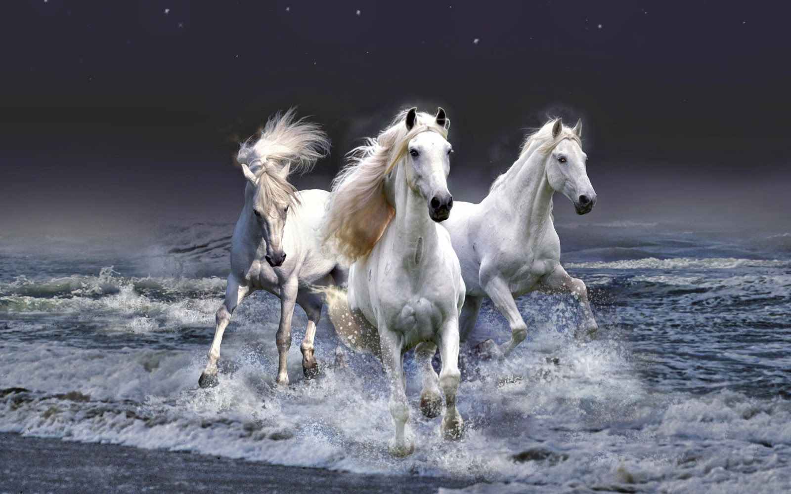 Windows 8 hd wallpapers horses hd wallpapers horses hd wallpapers altavistaventures Image collections