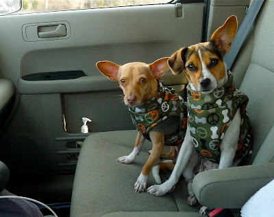 Dogs In Front Seat