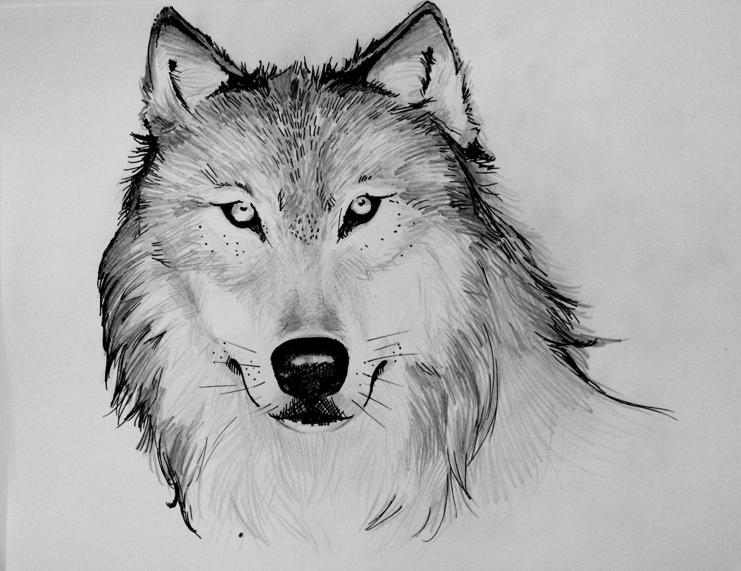 Almost A Girl  Mostly A Ghost  Wolf Drawings