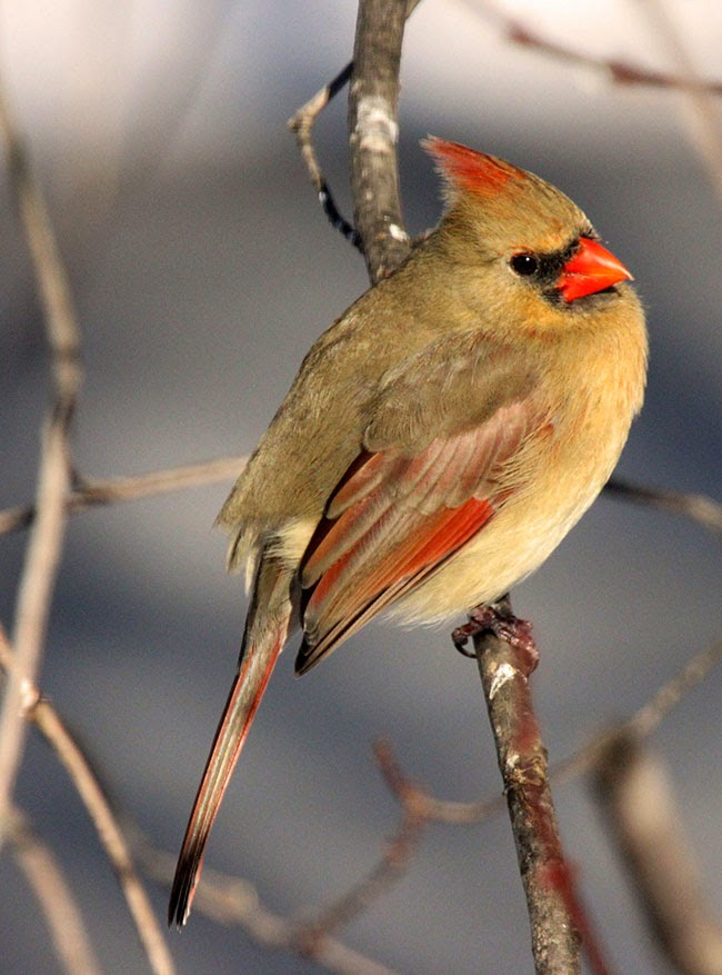 spring-y bird