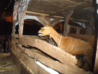 Animales en el interior de los carros