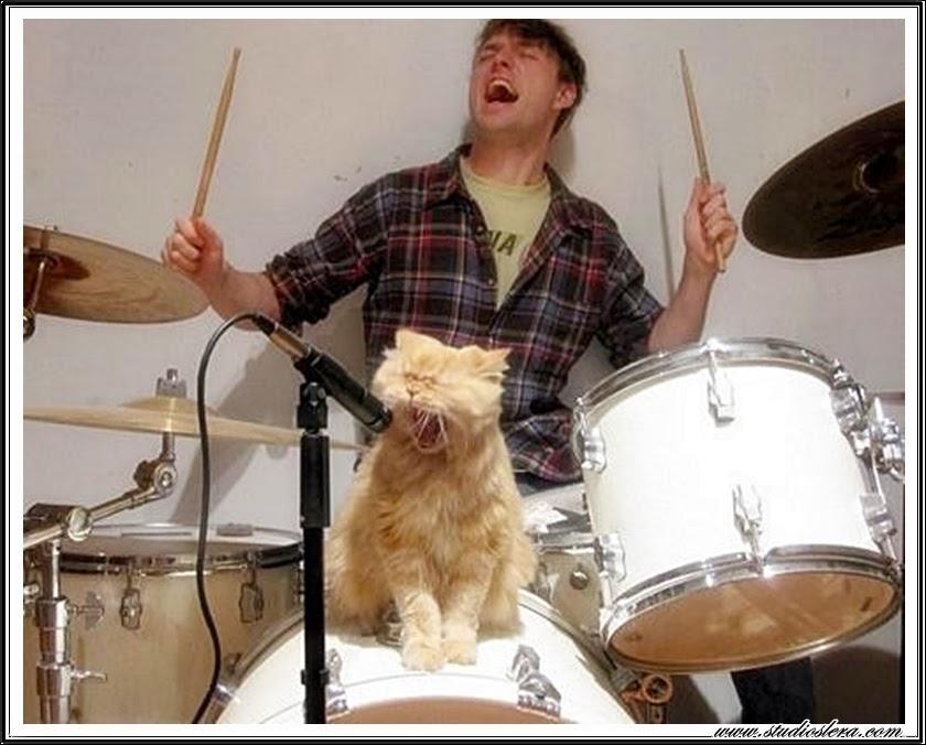 studioslera.com bateria gato cantando