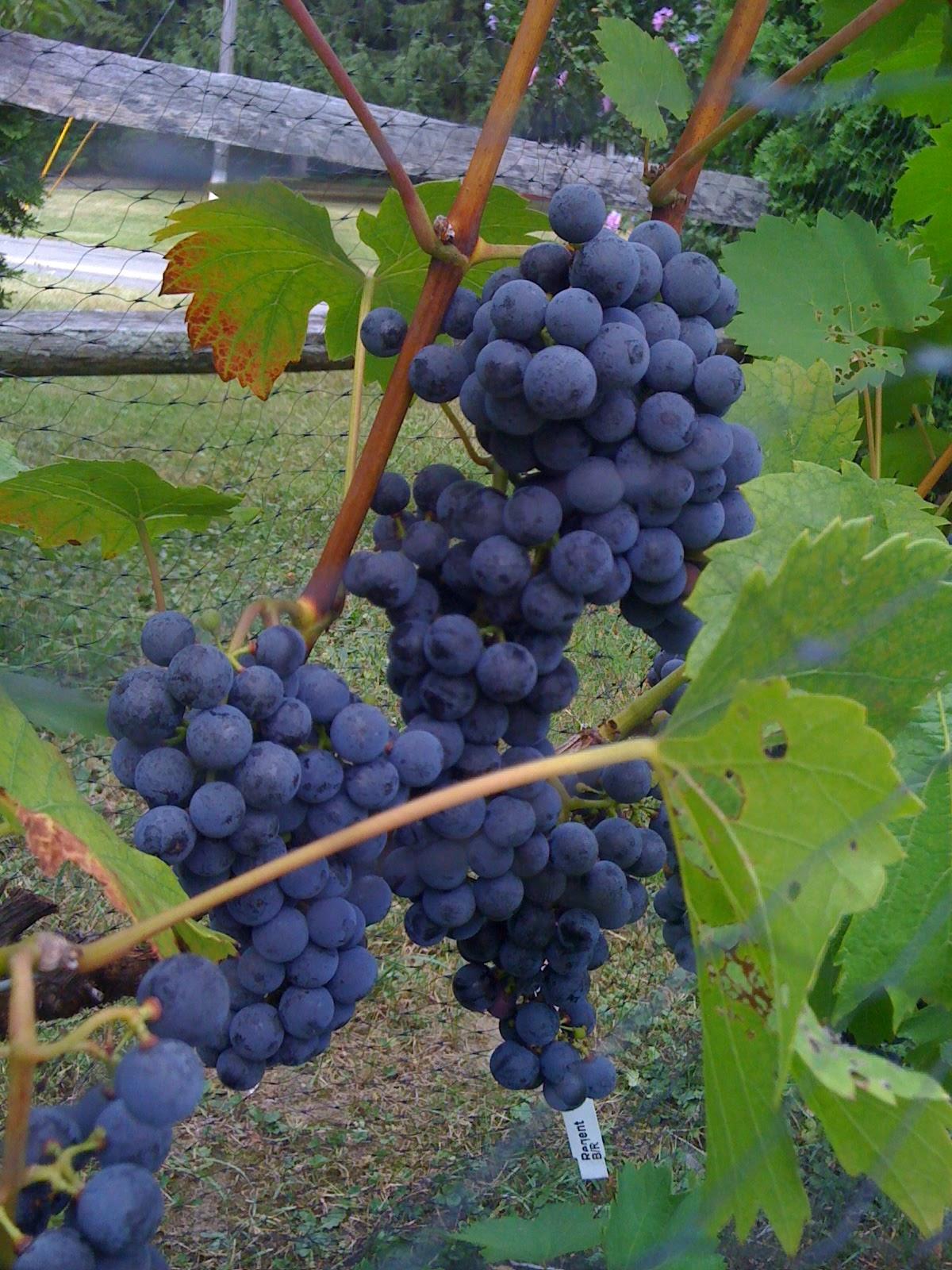 backyard vineyard u0026 winery