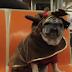 ΒΙΝΤΕΟ: Oι περιπέτειες του Candy: Χριστούγεννα στην Νέα Υόρκη...