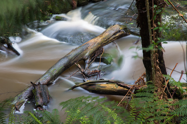 fallen trees in sheoak creek