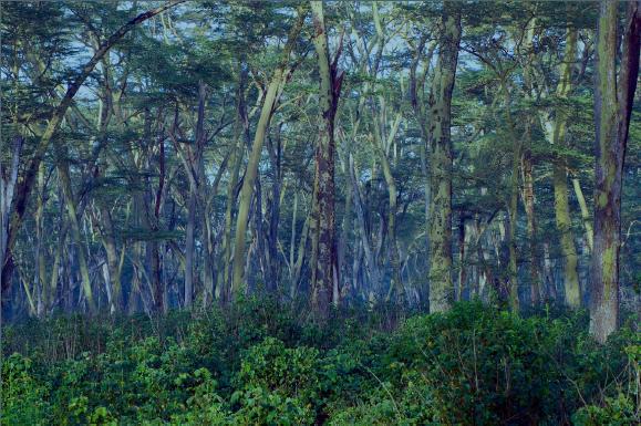 essay world nature conservation day ward churcill essay scholarship essay samples essay writing center