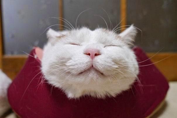 el gato mas feliz y dormilon del mundo