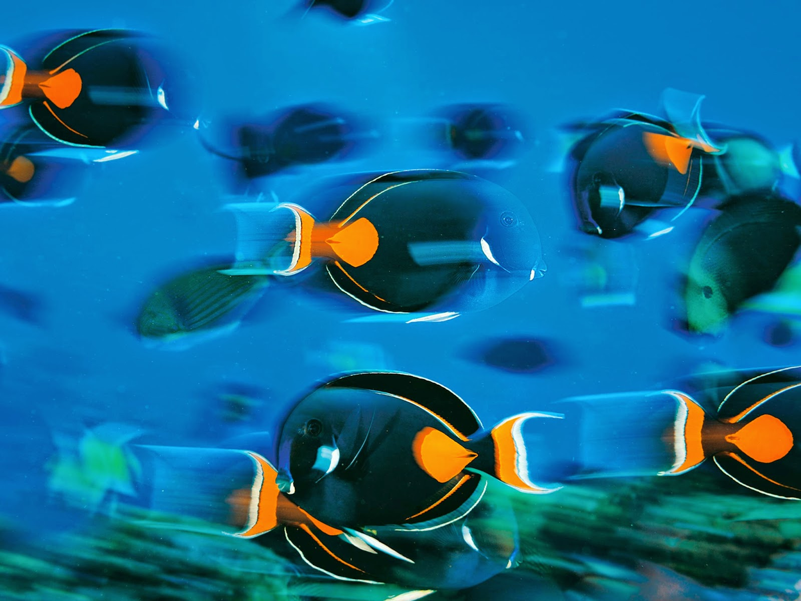 This Photo Shows A Contrast In Color With The Complementary Colors Blue And Orange Photograph By Brian Skerry