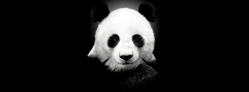 Une couverture facebook personnalisée panda