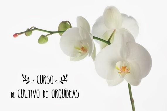 cultivo de orquídeas - curso em São Paulo
