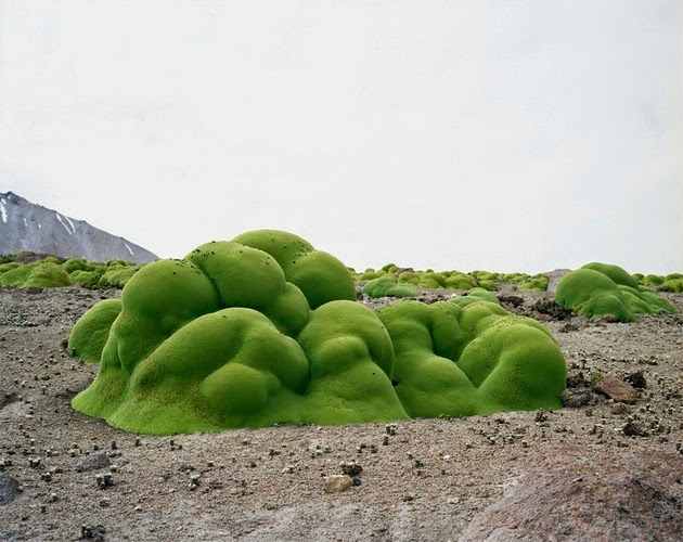 photographer Rachel Sussman oldest living things