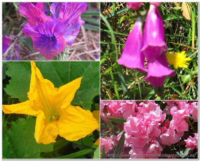 Seguimos descubriendo flores diferentes
