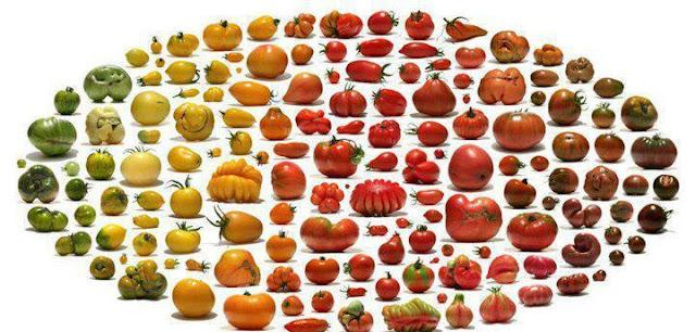 tomato plants acquired