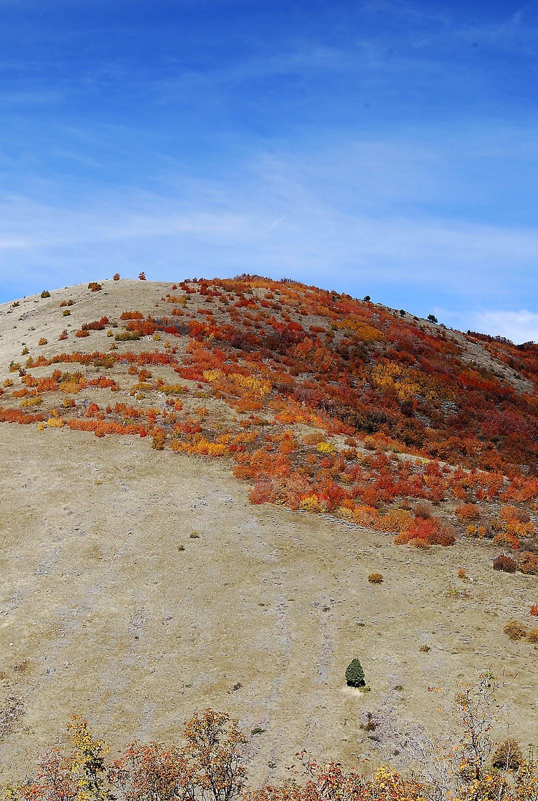 More sanctuary ranch color visit ogden valley utah for Sanctuary ranch