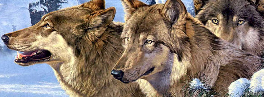 Copertine facebook lupi for Disegni di lupi da stampare