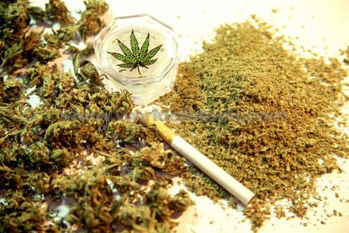marijuana addiction in adolescents Adolescents prenatally exposed to marijuana are more likely to use the drug although the evidence regarding marijuana use based on ethnicity differs, studies suggest higher marijuana use and dependence in minority groups.