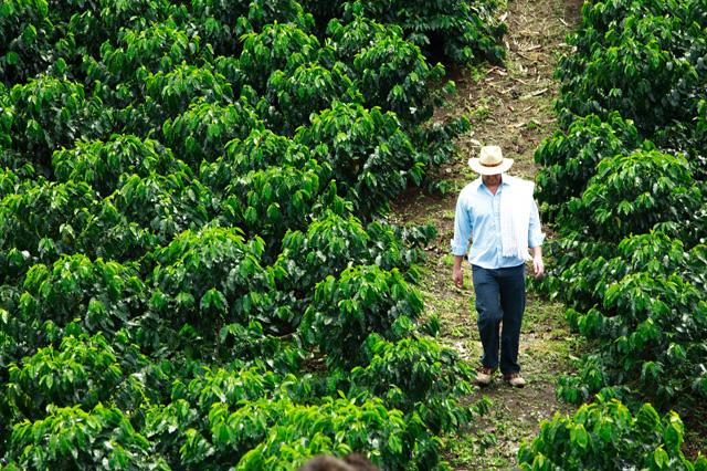 finca de cafe colombia