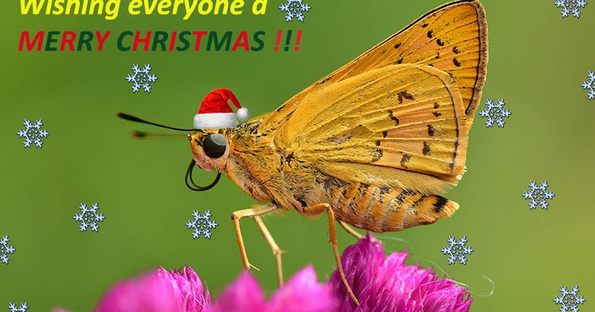Butterflies Of Singapore Merry Christmas And Happy New Year