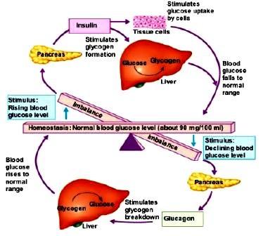 Sabre Brains: The Pancreas!