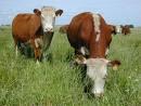nuestra ganaderia de carne