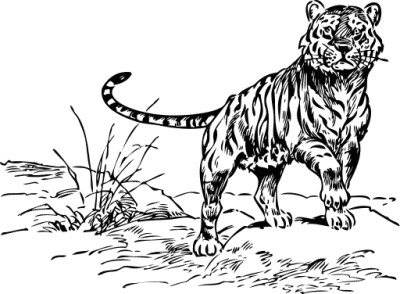 Tiger Clip Art Black and White