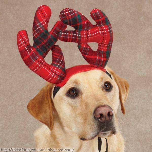 Dog - Christmas deer.