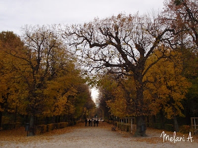 Autumn, Vienna // photo by Melani A - magsbeadscreation.com
