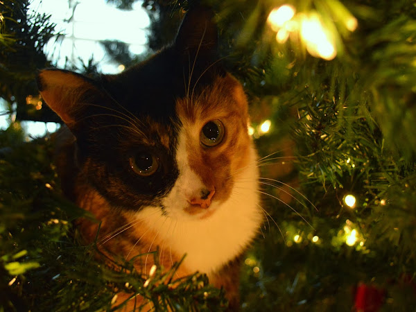 Decorating & Kitties