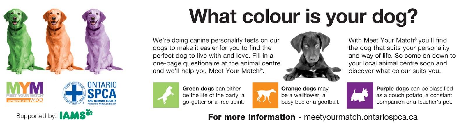 meet your match pet program