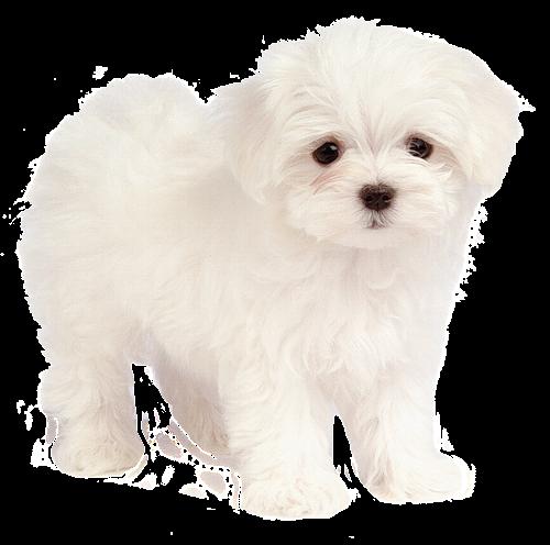 Zoom dise o y fotografia cachorros y mascotas png fotomontaje for Red transparente para gatos
