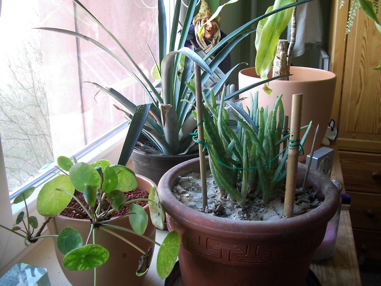 schlafzimmer pflanzen pflanzen im schlafzimmer pflanzenfreunde, Schlafzimmer entwurf