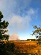 Florida Wildfire (florida brushfire)