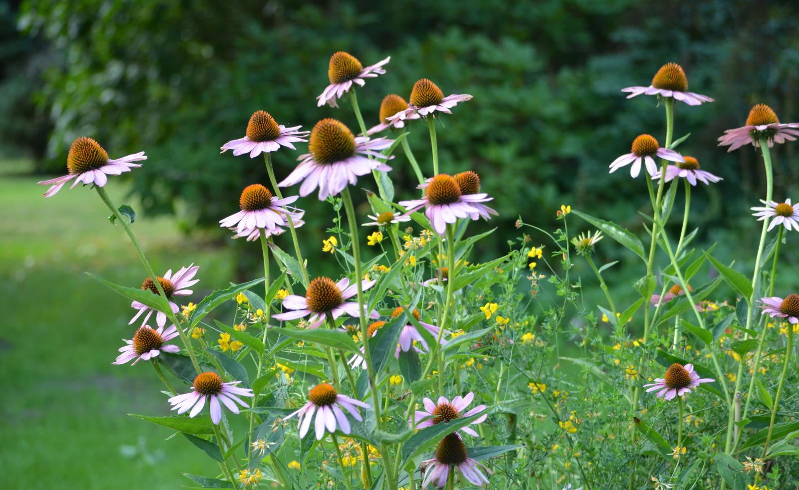 Caroline augustus 2013 - Ontwikkel een grote tuin ...