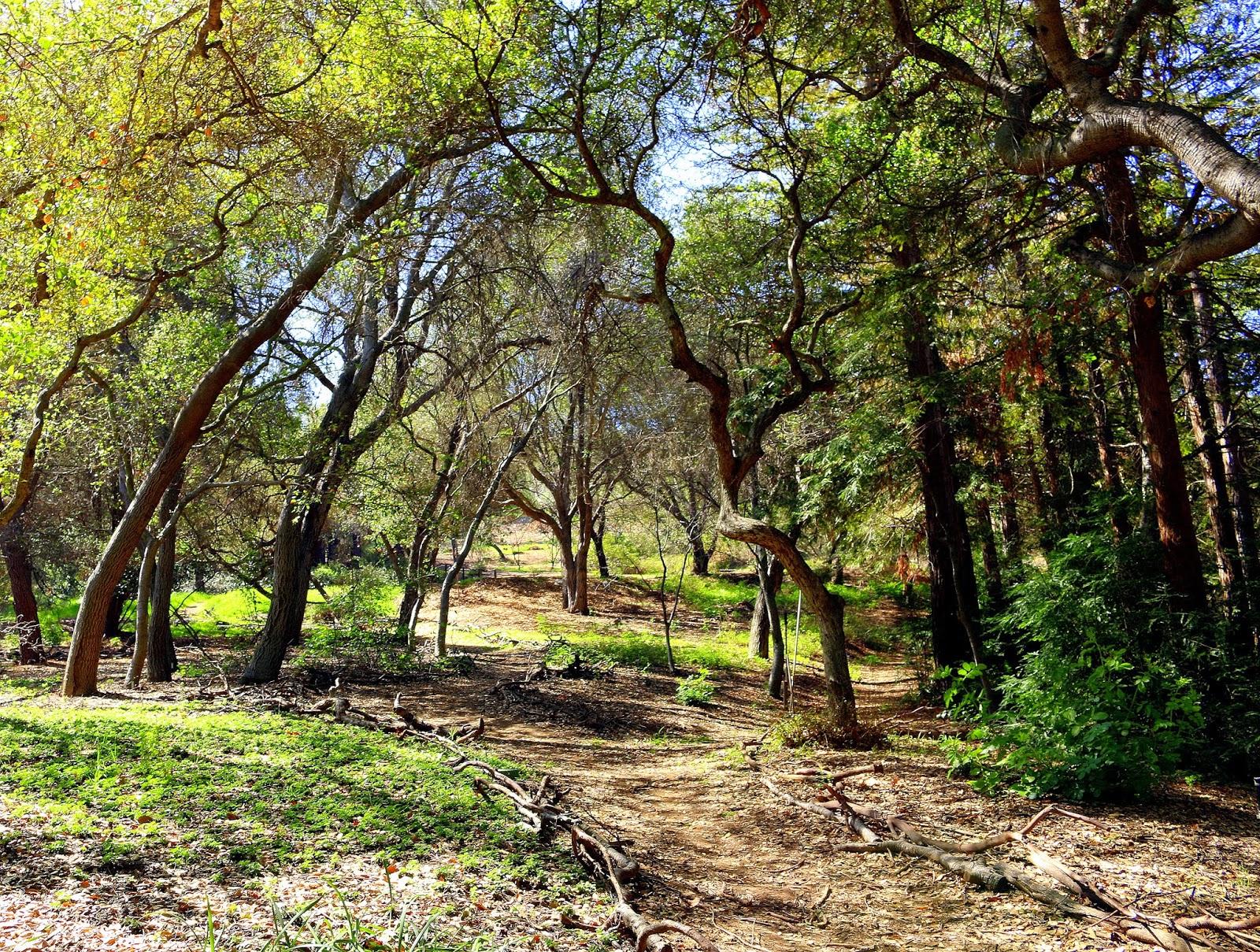 Alex\'s Weblog: Descanso Gardens
