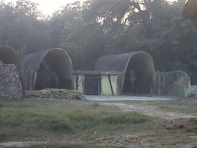 Elephants in Delhi Zoo